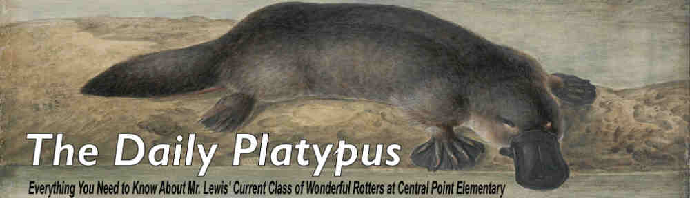 The Daily Platypus