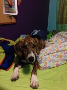 Sophie's dog Loki